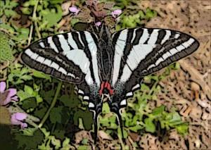 butterfly-potomac_filtered